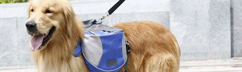 NEWS RELEASE: State Police encourages Michiganders to Create an Emergency Preparedness Kit for Pets